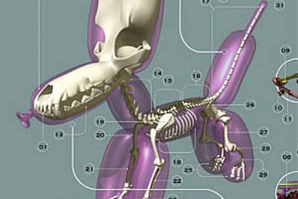 Анатомия бойла